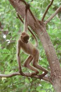 Monkeyspider1
